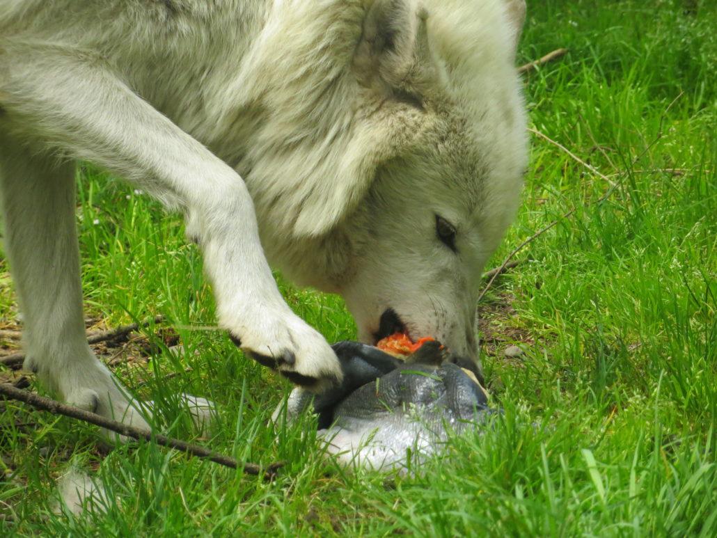 Lonnie with salmon