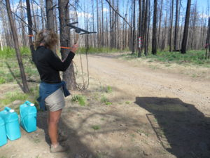 Wendy Spencer uses telemetry equipment to locate sign of collared wild Mexican wolves.