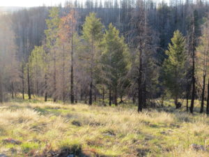 This is the Corduroy Creek area in Arizona, where the wolf pen was located.