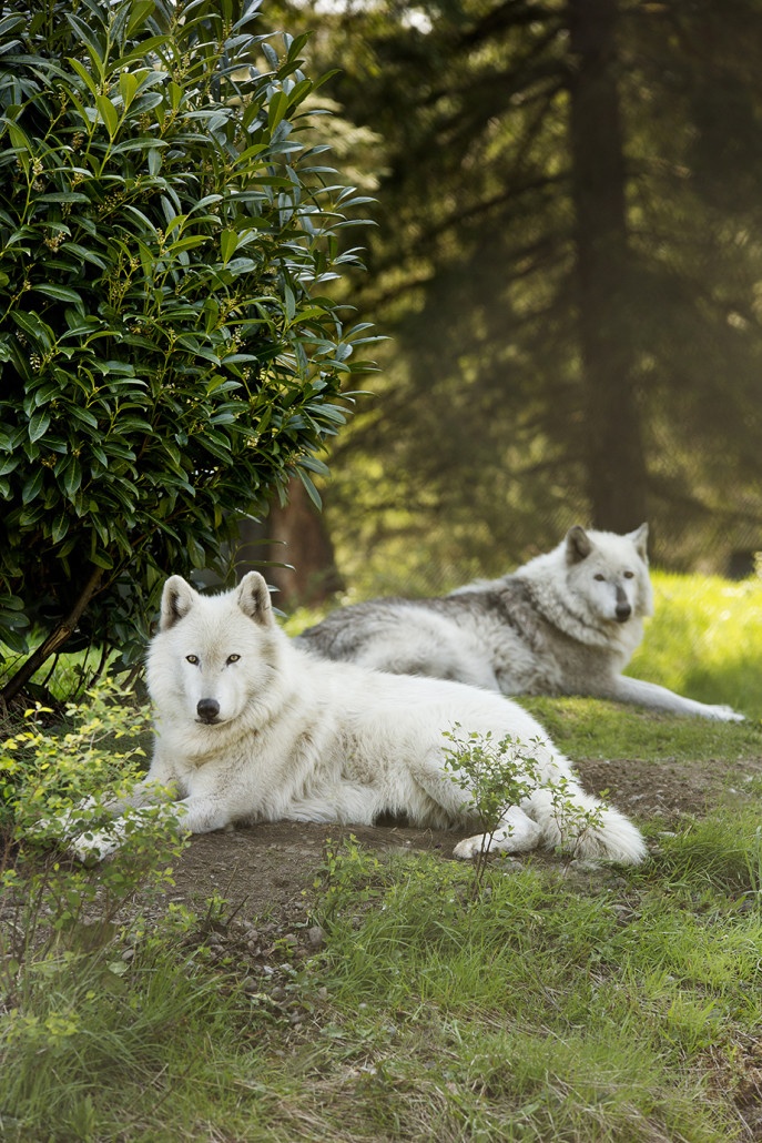 About Your Sanctuary Visit Wolf Haven International