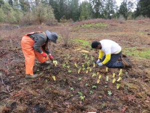 Volunteer planting plugs that will attract native butterflies.
