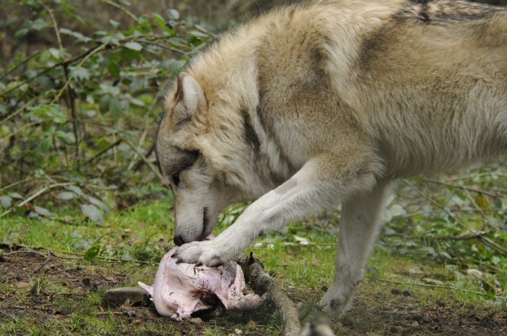 Lakota managed to eat his entire turkey (and the fixin's) in six minutes.