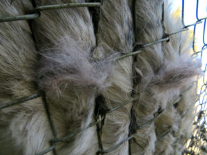 Fence growing fur?