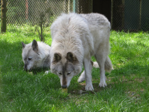 Mehina and Klondike