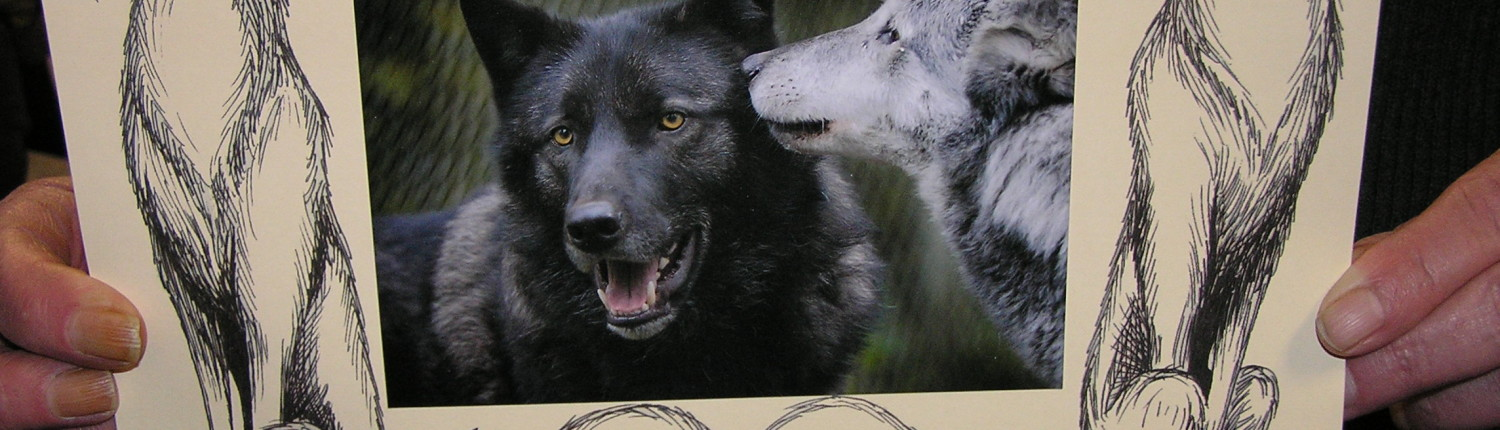 Volunteer designed frame for wolf photos