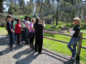 Volunteer guide talks to group about wolves.