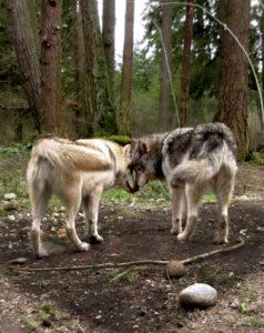 Lakota & Sequra