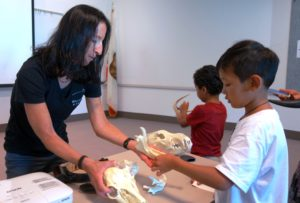 Skie shows skull models to young people