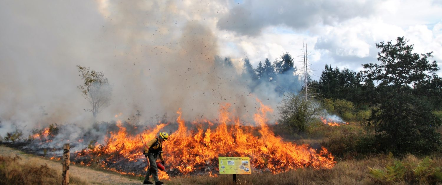 Controlled burn at Wolf Haven